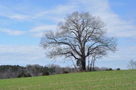 Original Tree Picture