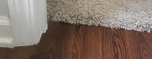 Seamless Carpet To Hardwood Floor Transitions Sheekgeek
